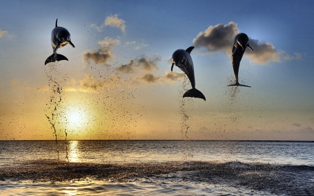 Dolphins Leaping in the Sunset F1 - photo, jumping, leaping, beautiful, animal, photography, dolphins, wide screen, wildlife
