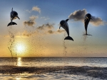 Dolphins Leaping in the Sunset F1