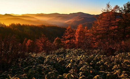 The Rays of the Sun - forest, sunrise, trees, mountain, autumn