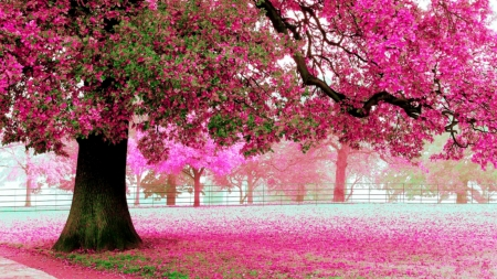 Pink - ground, flowers, tree, pink