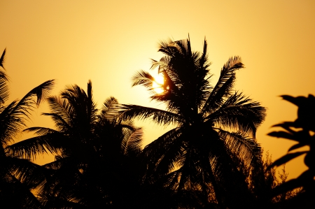 Into the sunset - sun, palm, tree, sunset