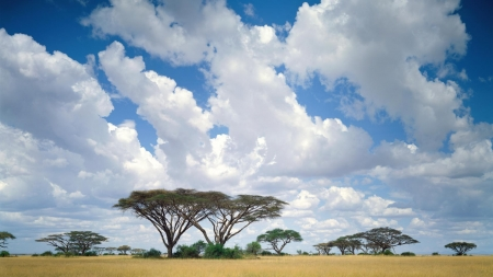 Masai Mara Fields Nature Background Wallpapers On Desktop Nexus