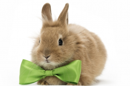 Cute bunny - rabbit, iepure, easter, bow, animal, green, bunny, rodent, white