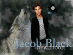 jacob black werewolf