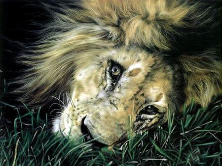 Majesty At Rest - art, resting, beautiful, majestic, lion