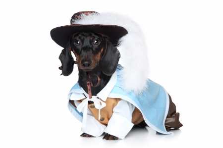 One for all and... - musketeer, costume, caine, creative, dachshund, animal, hat, feather, fashion, white, puppy, dog, blue