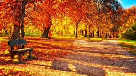 vibrant colors of autumn leaves in a park hdr - autumn, leaves, bemch, path, colors, hdr, park, trees
