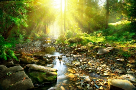 ♥ - nature, river, sunlight, greenery