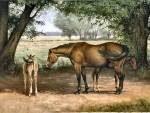 Summer Afternoon - Horses F