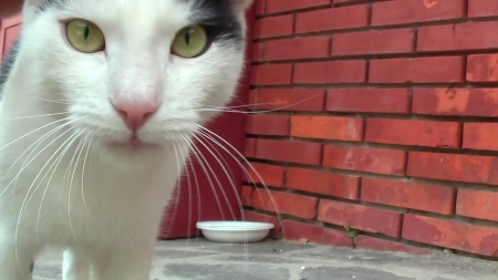 the little cat greets you - soft, white, eyes, cats, animals, sweet