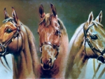 Three Musketeers - Horses