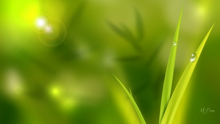 A Drop in Time - grass, light, leaves, dew, bamboo, green