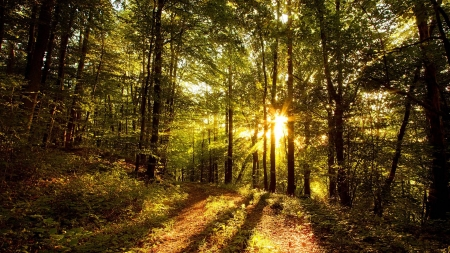 sunset in a forest - fun, cool, sunset, forest, nature