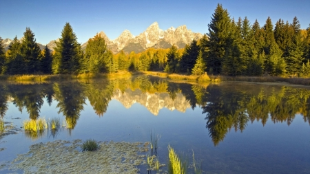 Summer Lake - forest, trees, summer, nature, reflection, lake