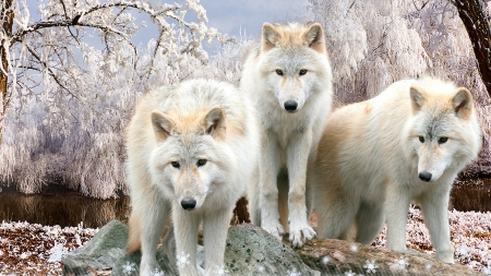 White Wolves Winter - snow, wolf, trees, wolves, Firefox Persona theme, winter