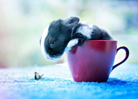 Bunny - rabbit, arefin03, iepure, black, cute, butterfly, cup, bunny, white, pink, blue