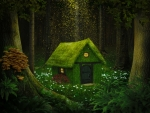 House in enchanted forest
