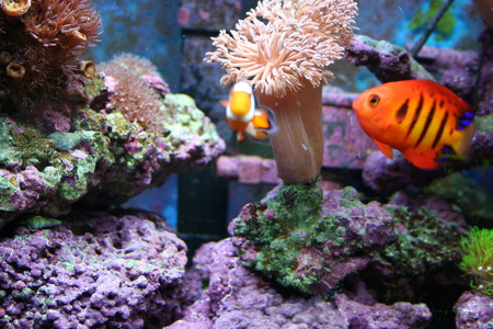 Saltwater Fish - salt, water, fish, saltwater, aquarium, exotic