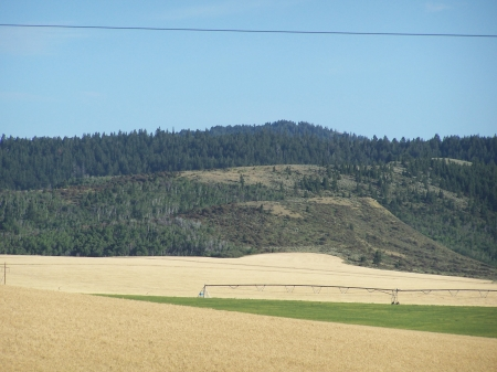 Grain Field with Irrigation, Ririe, Idaho - Irrigation, Crops, Farms, Fields