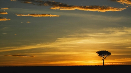 serene tree - cool, nature, sunset, fun, field