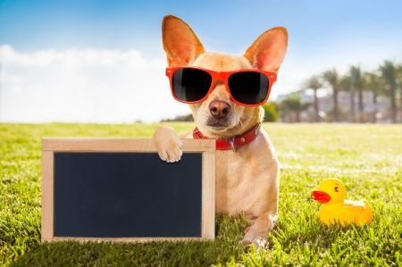 Have a nice day! - chihuahua, toy, caine, animal, card, sunglasses, vara, summer, puppy, dog