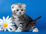 Cute kitten among daisies