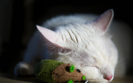 Cat Nap - feline, white cat, napping, sleeping, cats, animals