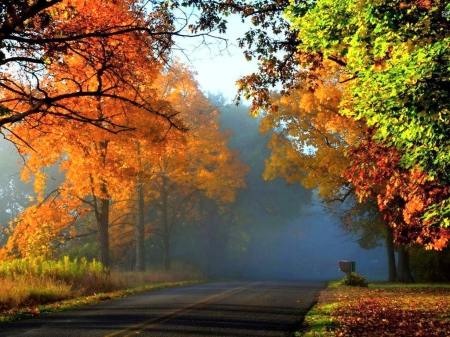Beautiful drive - orange, trees, drive, autumn