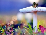 Tiny Fairy's Toadstool