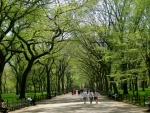 Walkway in Central Park