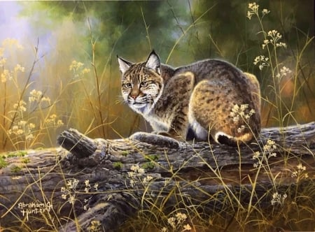 ..Bobcat.. - big wild cats, paintings, draw and paint, summer, love four seasons, cat, animals
