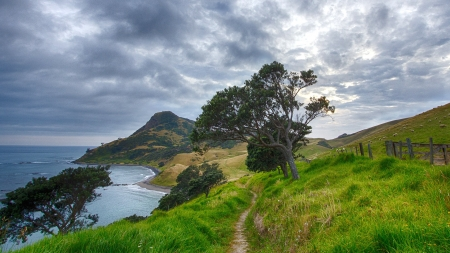 beautiful coastal scenery in new zealand - hills, sheep, pastures, trees, clouds, coast, sea