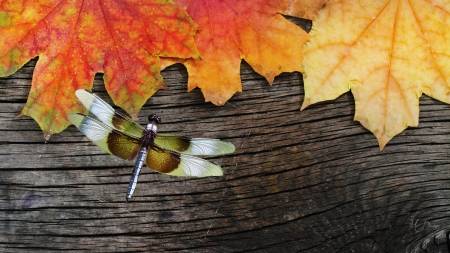 Fallen on Wood - fall, board, leaves, wood, dragonfly, autumn
