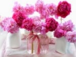 ✿⊱•╮Romantic Peonies╭•⊰✿