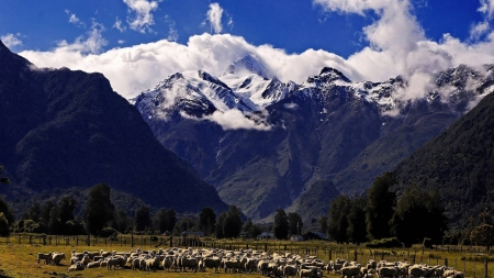 Field - sheep, landscape, nature, mountain