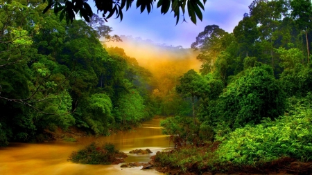 Rain forest river - rain, foreast, river, nature, tree