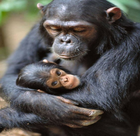Mother's touch - baby, Mother, love, animals