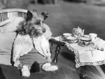 doggy tea party