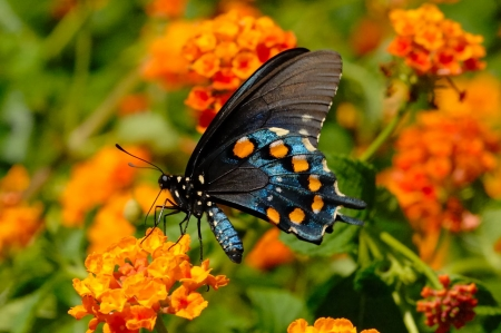 BUTTERFLY - WINGS, COLORS, PETALS, FLOWERS