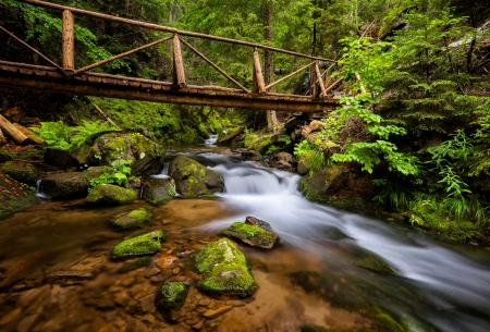 Forest cascades - forest, stream, beautiful, creek, trees, brook, stones, cascades, summer, waterfall, river