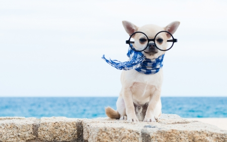 Acapulco Chihuahua - chihuahua, glasses, caine, animal, sea, cute, vara, summer, scarf, funny, white, puppy, dog, blue