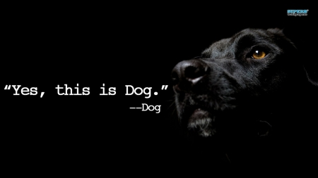 Hello This Is Dog Dogs Animals Background Wallpapers On Desktop