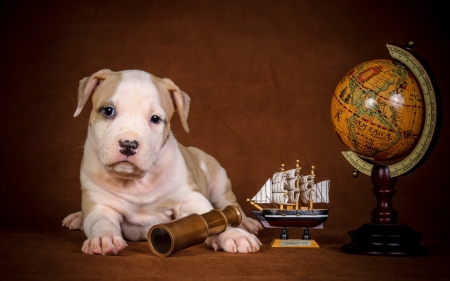 globe trotter - puppys, cute, animals, dogs