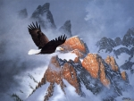 Eagle Flying in The Mountains