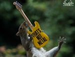 Squirrels rocks