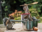 The great british squirrel bake-off