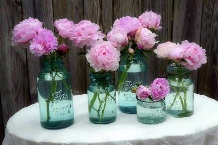 ✿⊱•╮Peonies in Aqua╭•⊰✿ - lovely still life, chic, love four seasons, peonies, photography, decorations, summer, flowers, garden, nature, beloved valentines, pink, jars