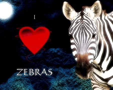 love zebras - heart, cute, zeb, furry