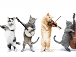 Kitty Quartet