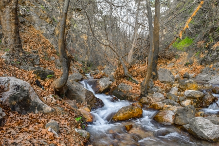 Autumn in Kurdistan - autumn, tree, leaves, water, wallpaper, waterfall, nature, leaf
